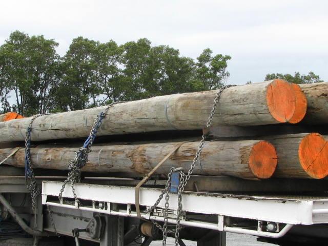Raw tree transportation